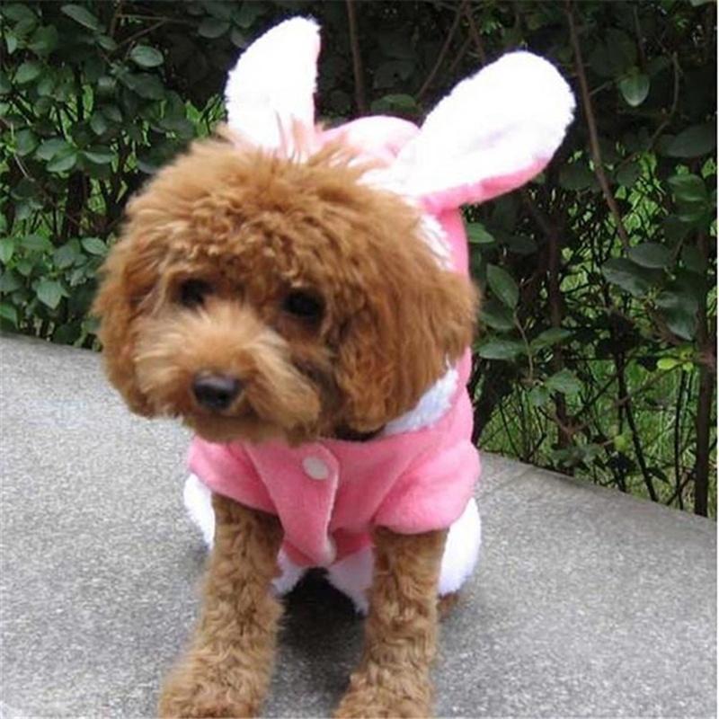 CatDog Wig Easter Bunny