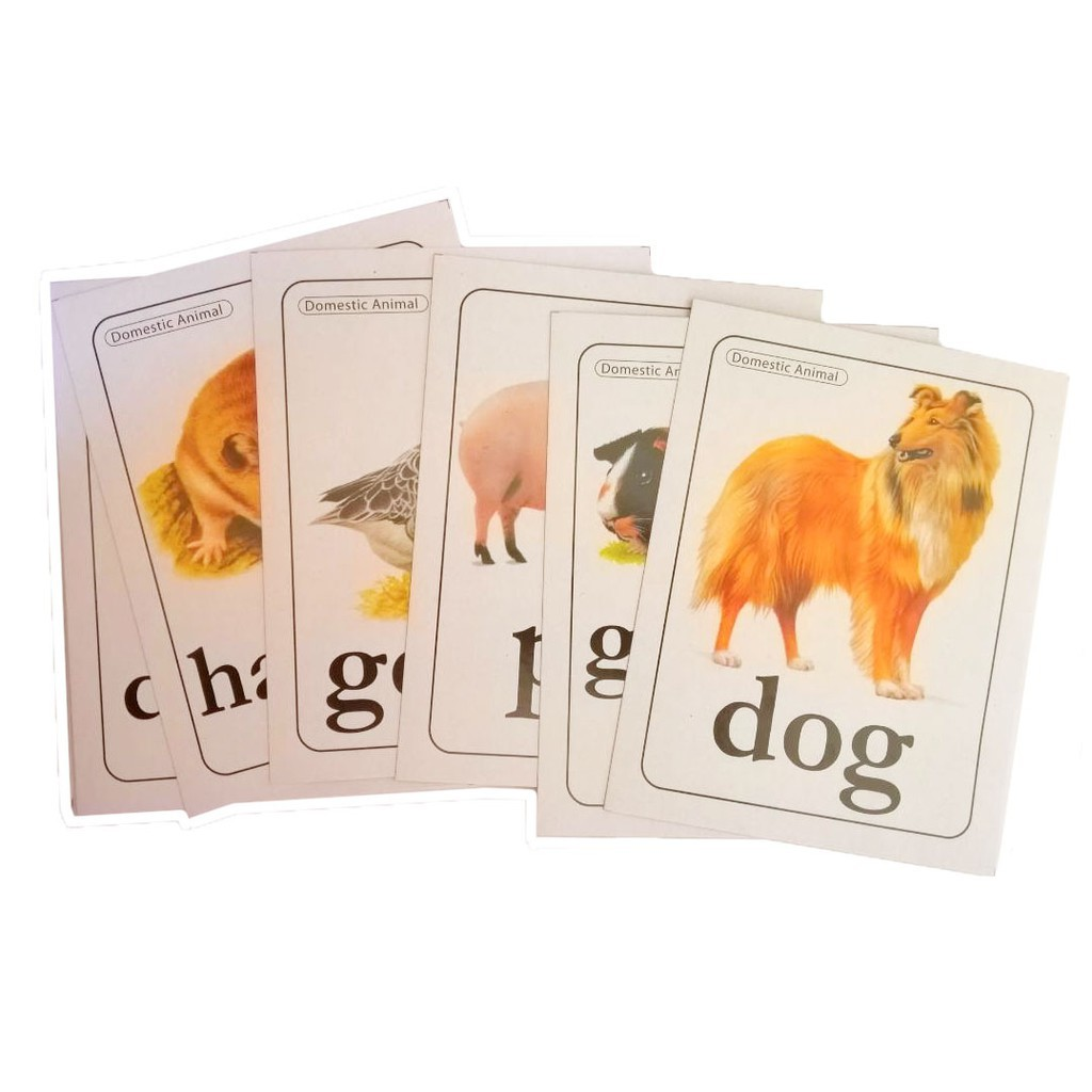 Card Educational Flash Cards Early Learning Animals 01ST