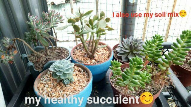 Soil Mix succulent/cactus 7in1 | Shopee Philippines