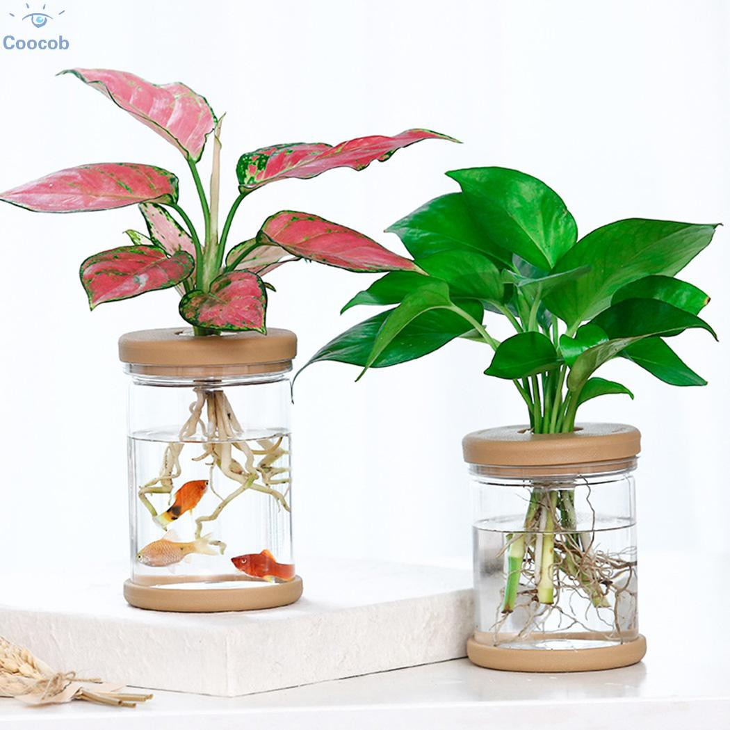 20pcs Clear Self Watering Pot Planter For Indoor Outdoor Plants ...