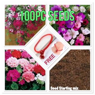 100pc Mix Variety Geranium Seeds Plus Soil