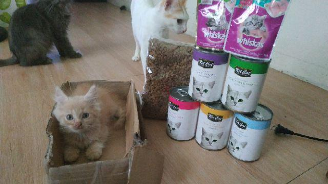 Special Cat Super Premium All Life Stages (Cat Food) 1kg
