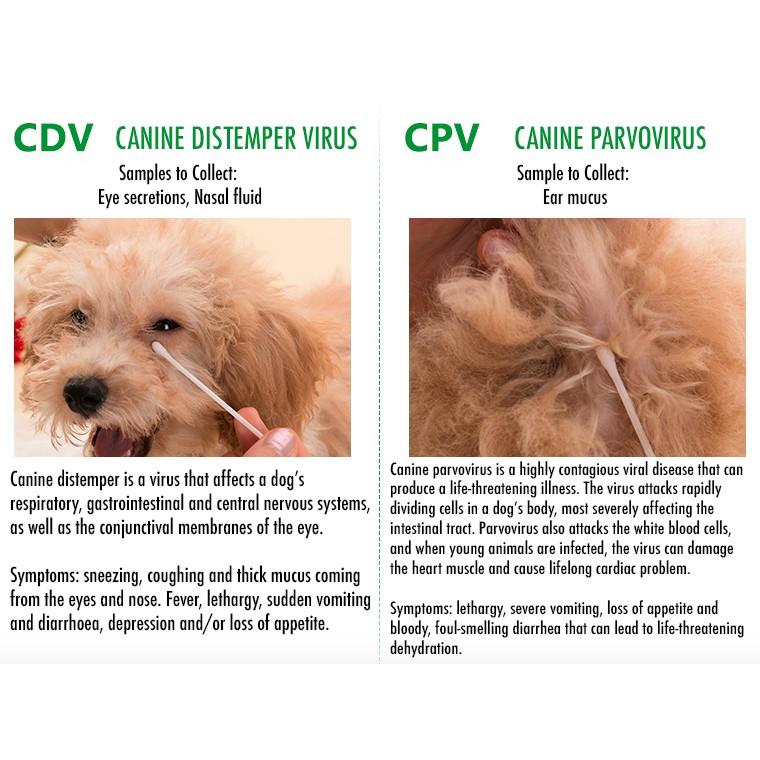 canine parvo distemper vaccine