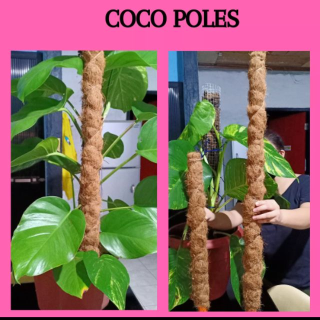 Pole for plants (vines or orchids)