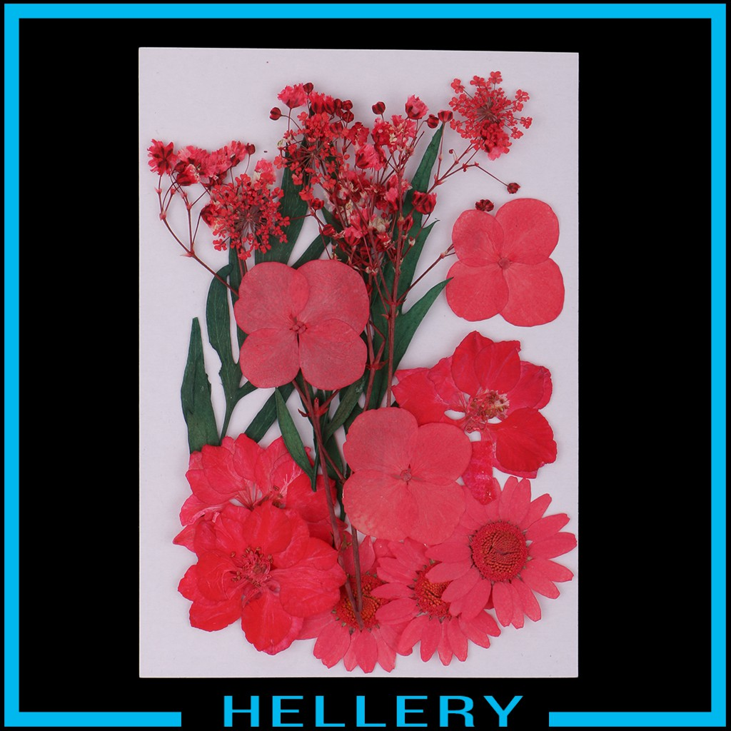 Hellery Beautiful 5 Kinds Real Dried Pressed Flowers Dry Leaves Flower Petals For Arts Shopee Philippines
