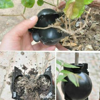 High Pressure Propagation Ball Root Grow Bag Patio Flower Pots for Plant Garden Cutting Grafting Rooting Growing Breeding Box Fayear 3pcs Plant Assisted Rooting Device S+M+L, Black