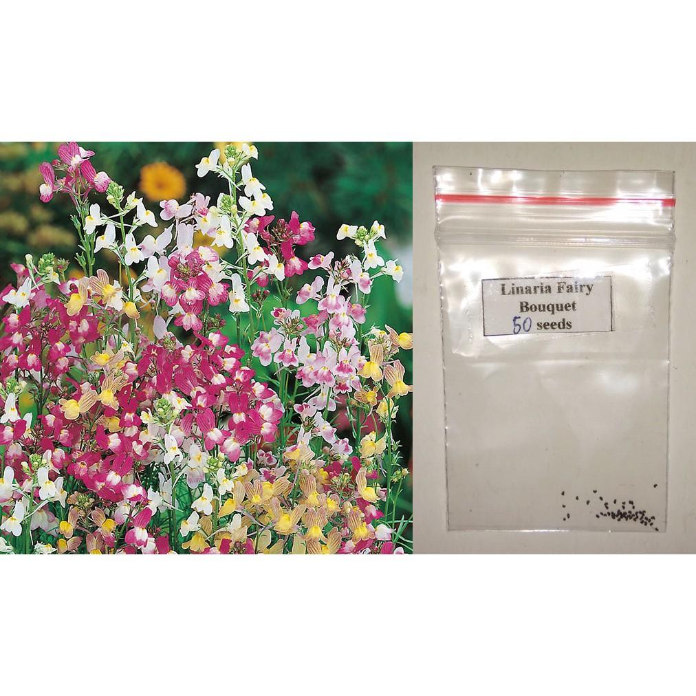 Linaria Flower Seeds (Fairy Bouquet) (100 seeds)