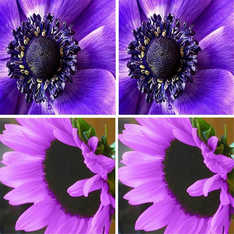 300 Gambar Bunga Venus Flytrap HD Paling Baru