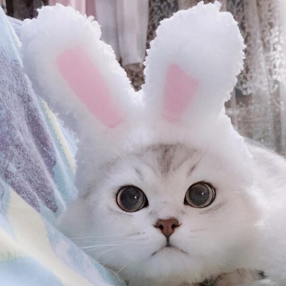 cat hat for bunnies Cat ears hat for pet bunny rabbit cat ears costume