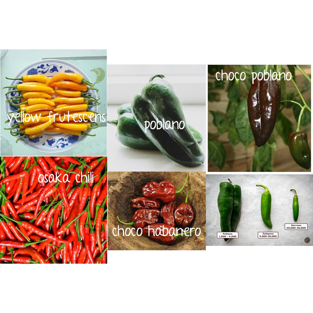 30 seeds Red Thai Chili Pepper Seeds 97/% Germination