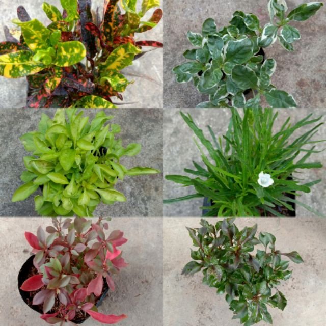 Cute Small Indoor Outdoor Plants Shopee Philippines