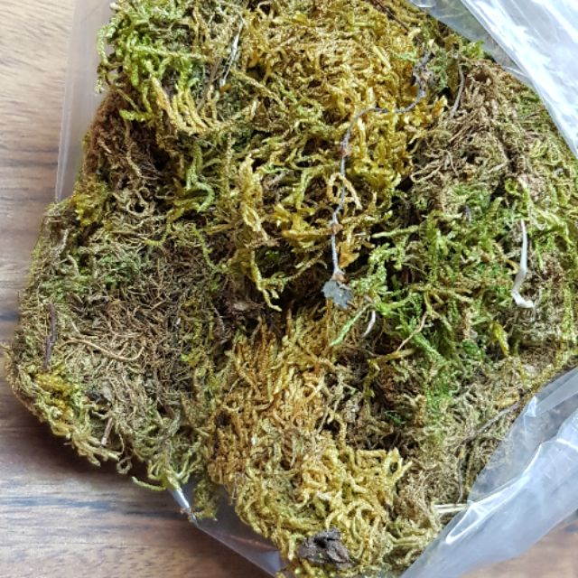 Dried Sphagnum Moss Or Peat Moss