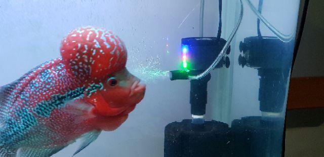 Venus Aqua LED M9901 Aquarium Powerhead