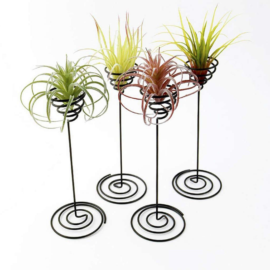 Air Plant Stand Holder Air Plant Base Tillandsia Planter Racks 3 Pack Shopee Philippines