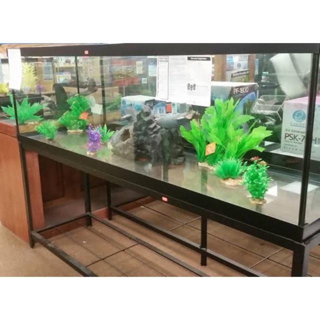 100 gallons gals aquarium fish tank