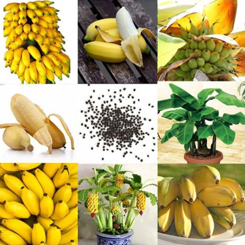 100pcs Dwarf Banana Tree Seeds Mini Bonsai Plant Exotic Rare