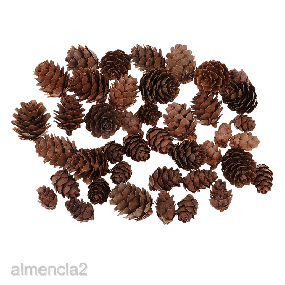 50x Decorative Pinecone Pine Cones Vase Bowl Filler Display Table Decoration