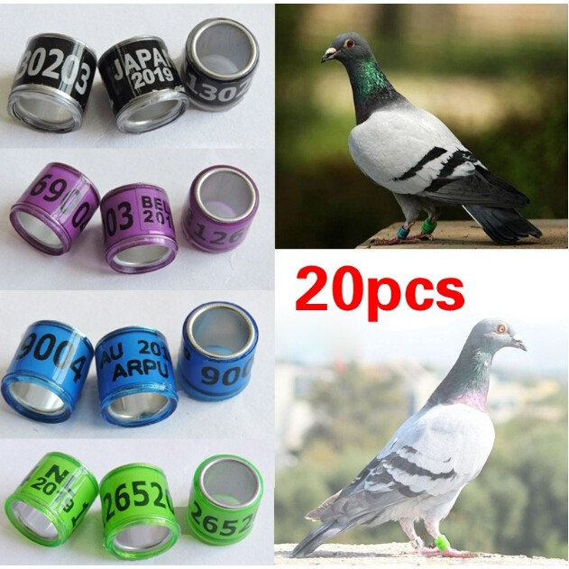 2019 Pigeon Leg Rings Identify Dove Bands 8mm Plastic With Al Gb Rings Pigeon Training Supplies Aluminium Rings For Pigeons Security & Protection Ic/id Card
