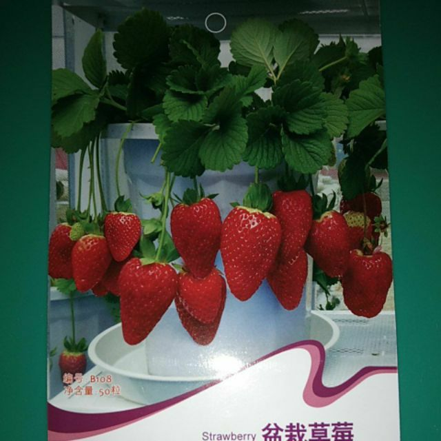 Strawberry Seeds Red Shopee Philippines If the video embedded above is not viewable, you can see it at these other fine video sharing sites: shopee philippines